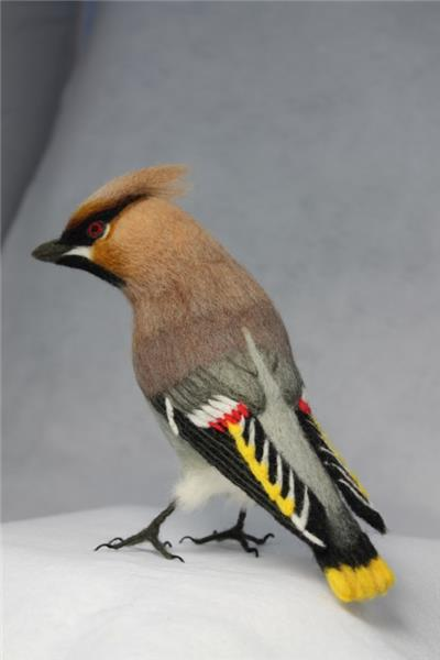 Waxwing with folded wings